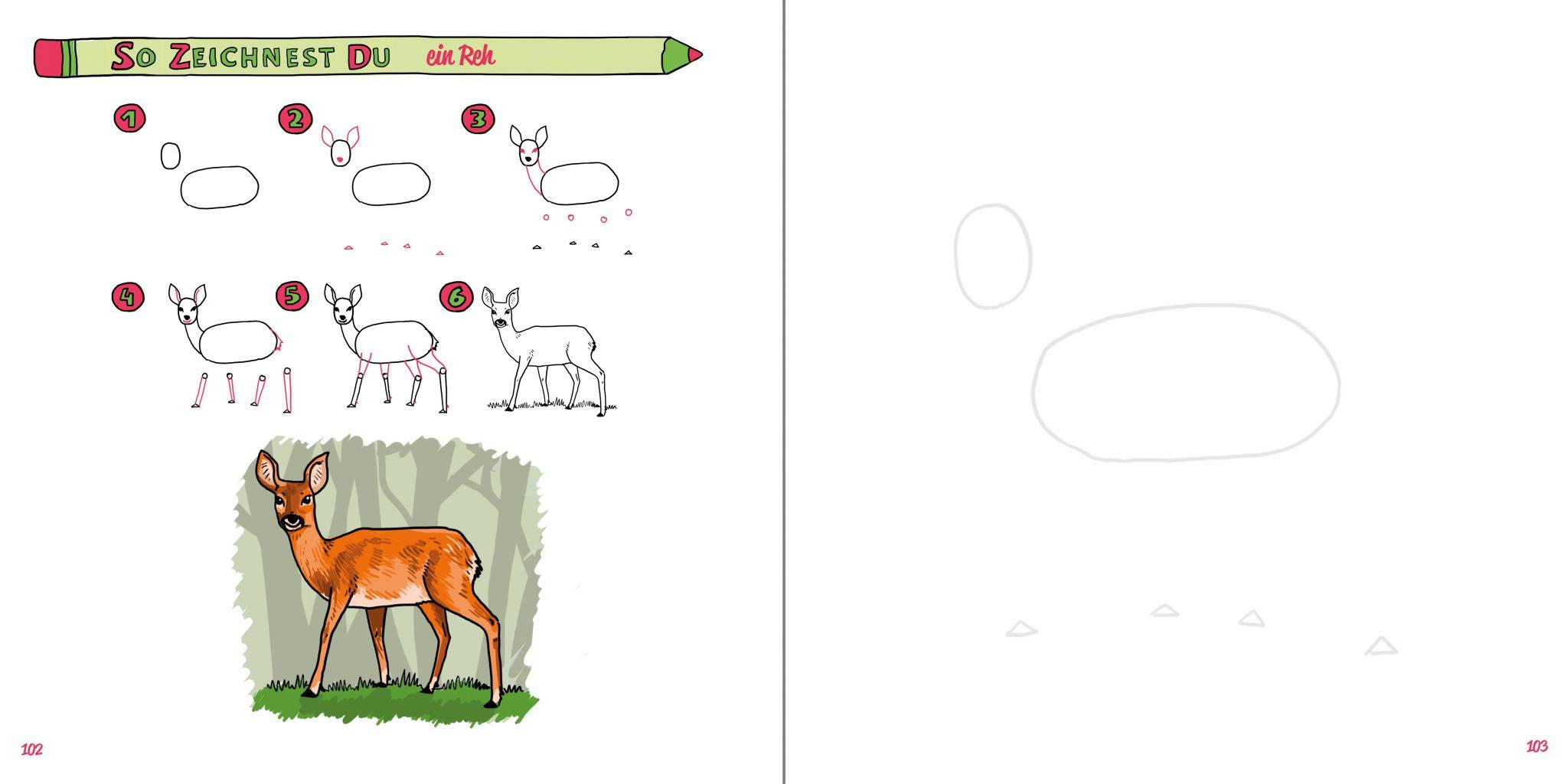 So zeichnest du ein Reh Buch Zeichenanleitung