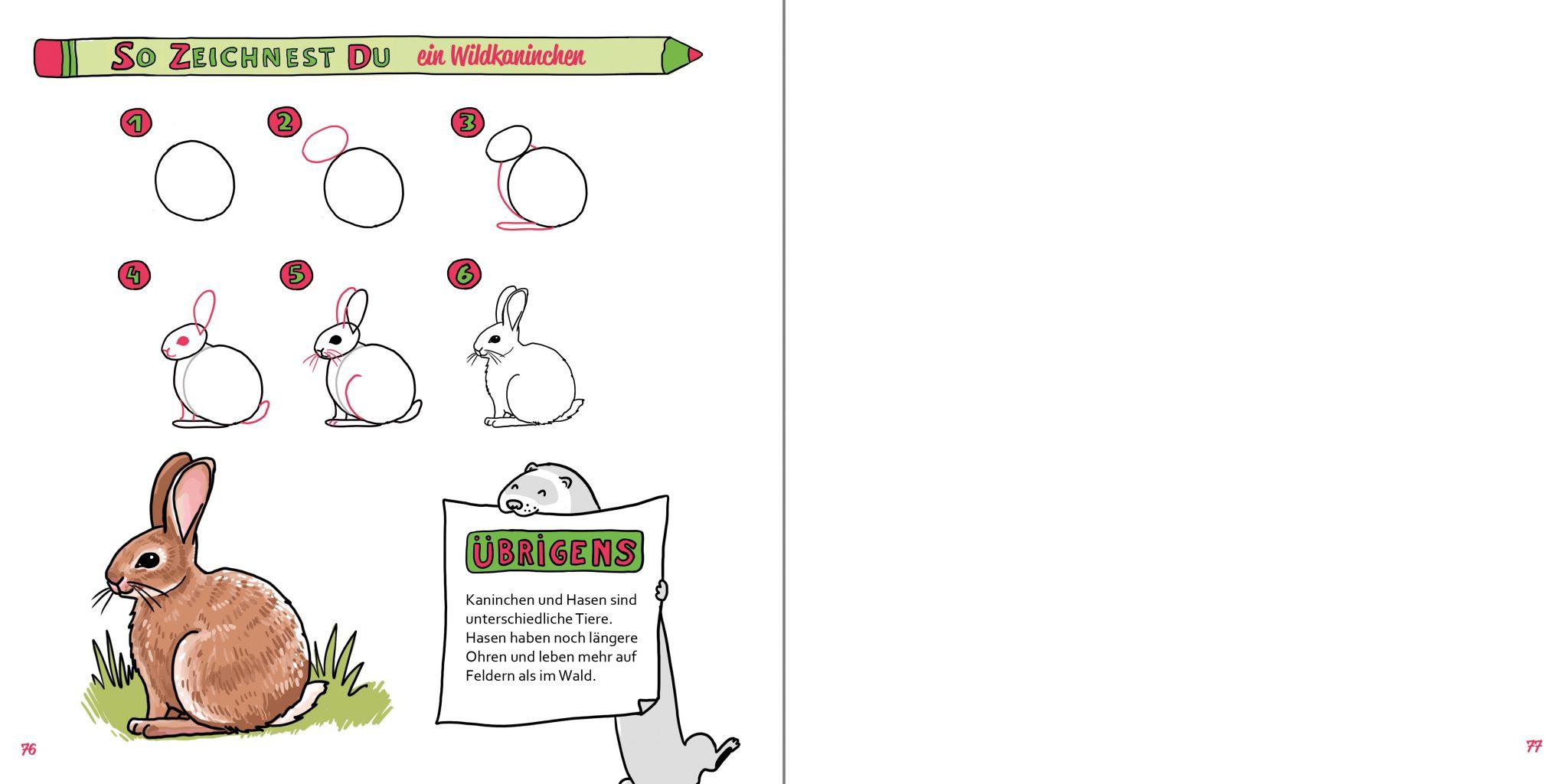 So zeichnest du ein Wildkaninchen Buch Zeichenanleitung