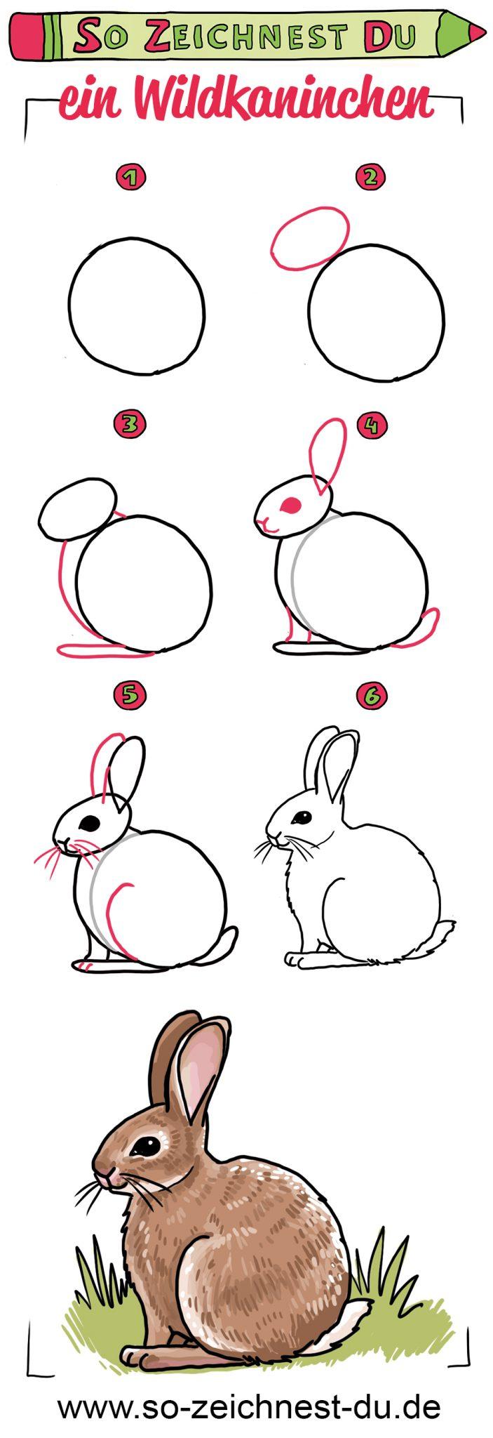 So zeichnest du ein Wildkaninchen Zeichenschule