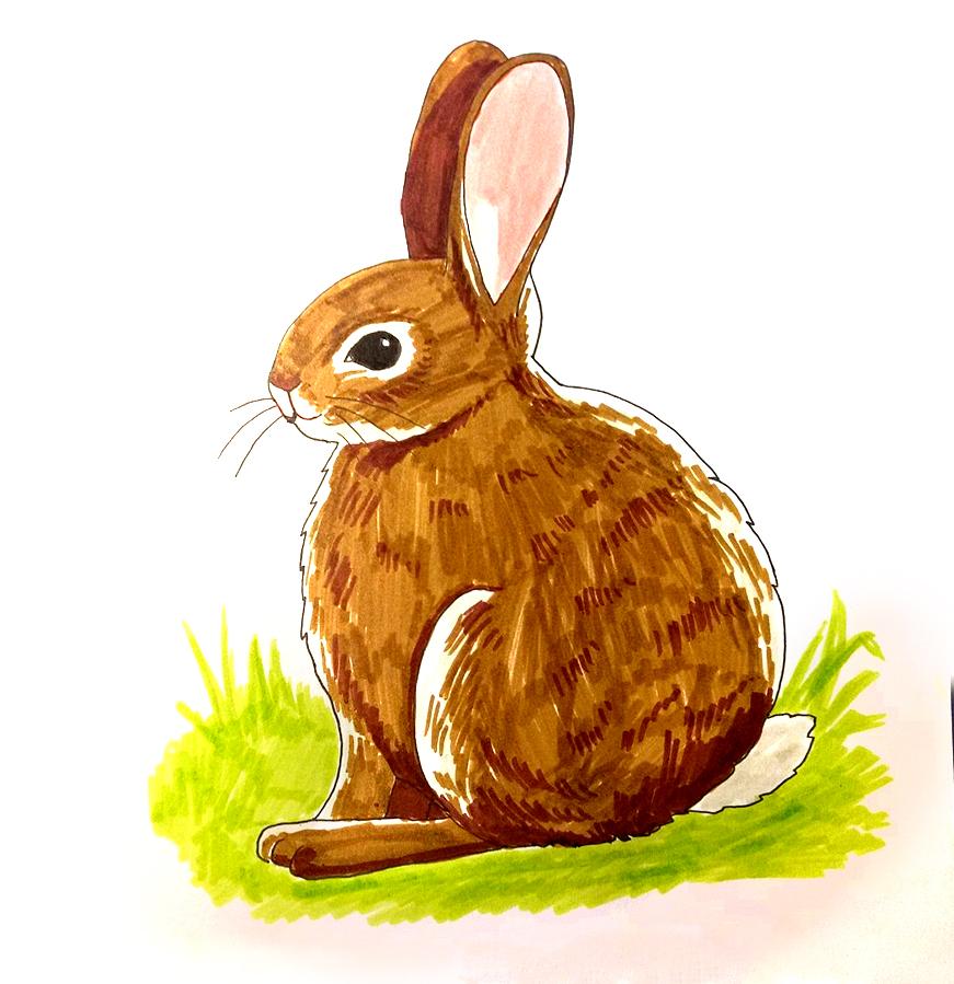 So zeichnest du ein Kaninchen - Ausmalen Schritt 5