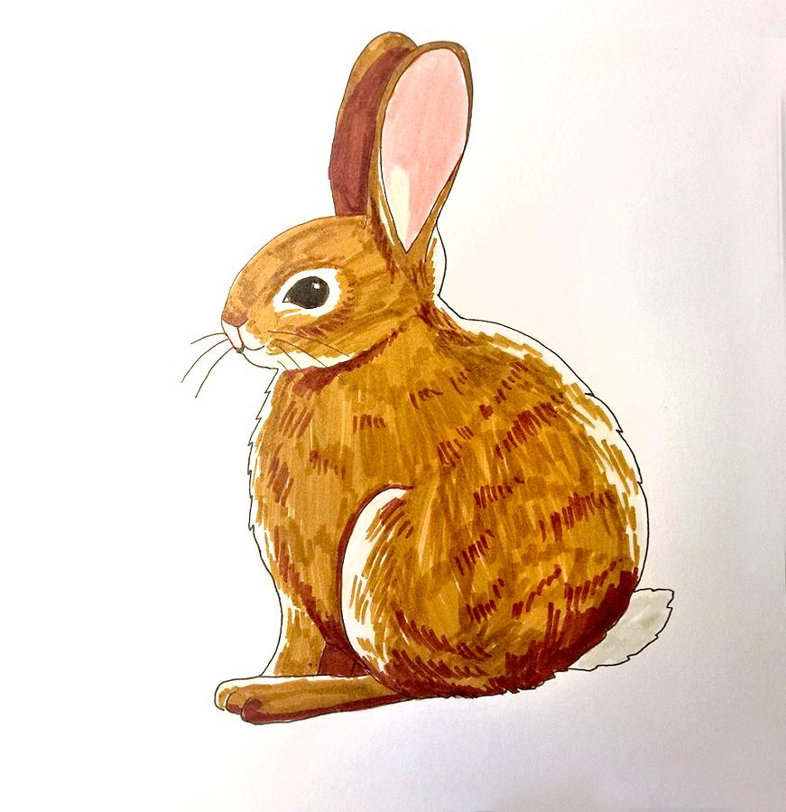 So zeichnest du ein Kaninchen - Ausmalen Schritt 4
