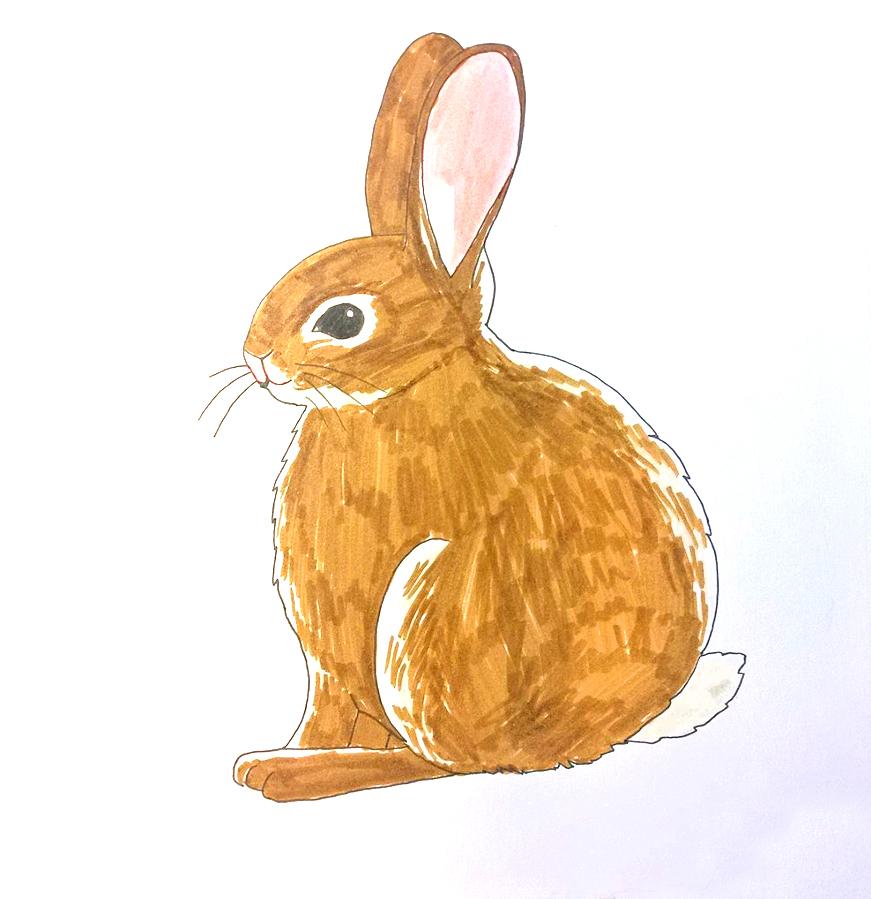 So zeichnest du ein Kaninchen - Ausmalen Schritt 3