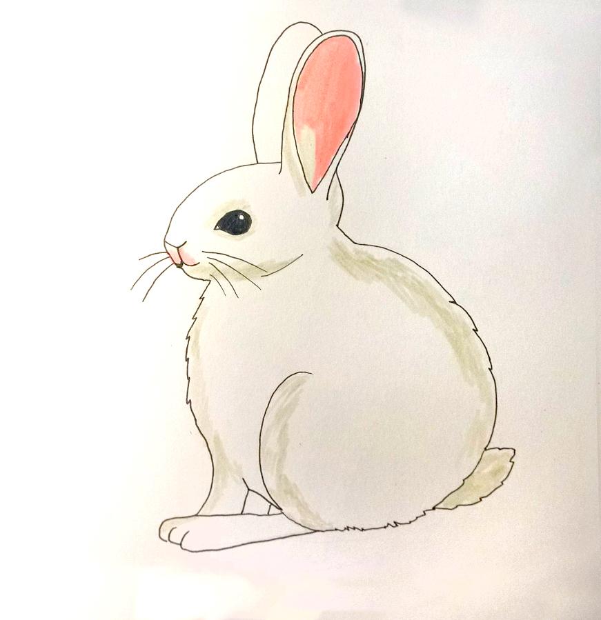 So zeichnest du ein Kaninchen - Ausmalen Schritt 2
