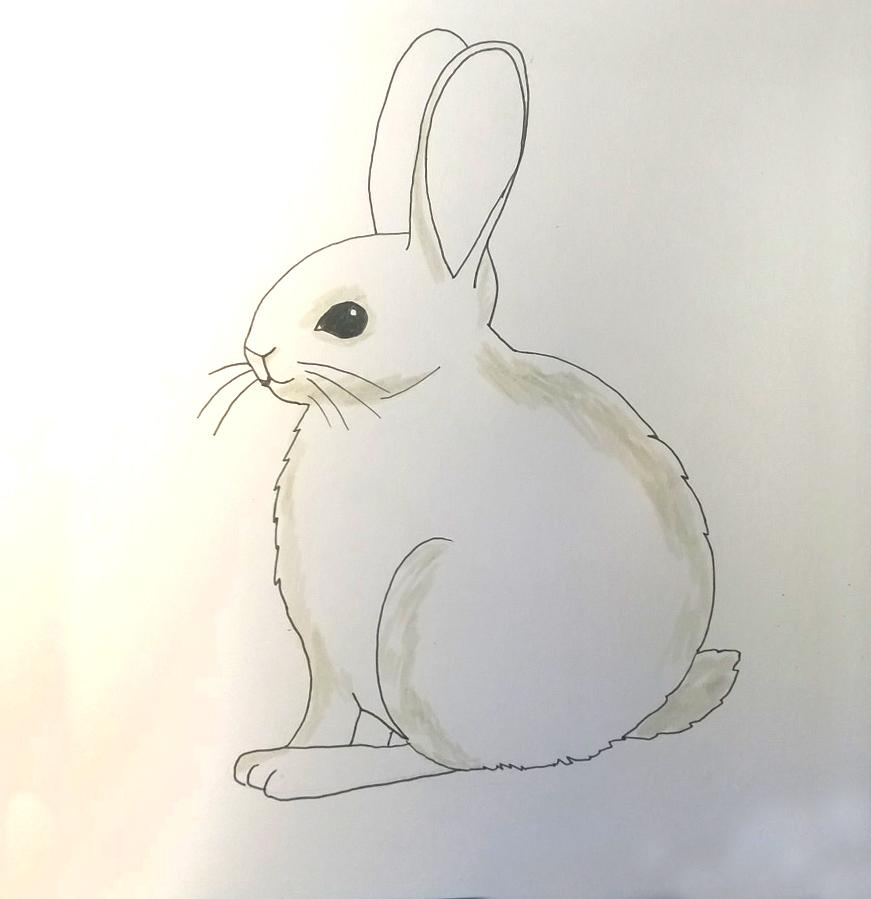 So zeichnest du ein Kaninchen - Ausmalen Schritt 1