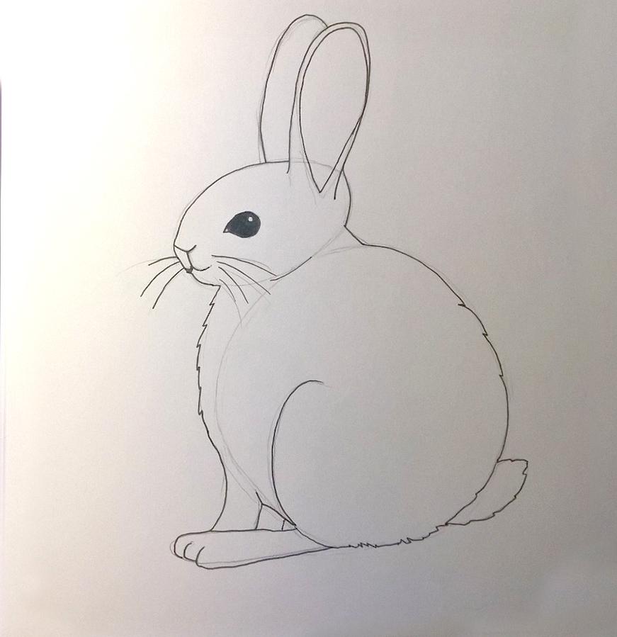 So zeichnest du ein Kaninchen, Zeichnung Schritt 5