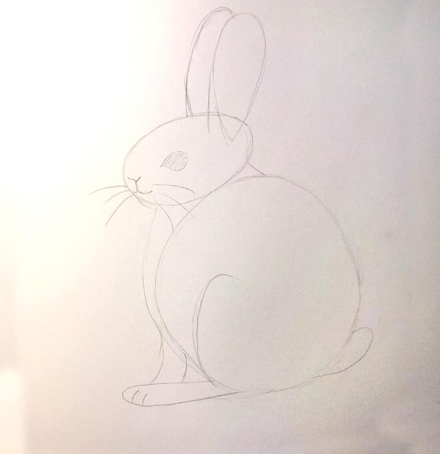 So zeichnest du ein Kaninchen, Zeichnung Schritt 4