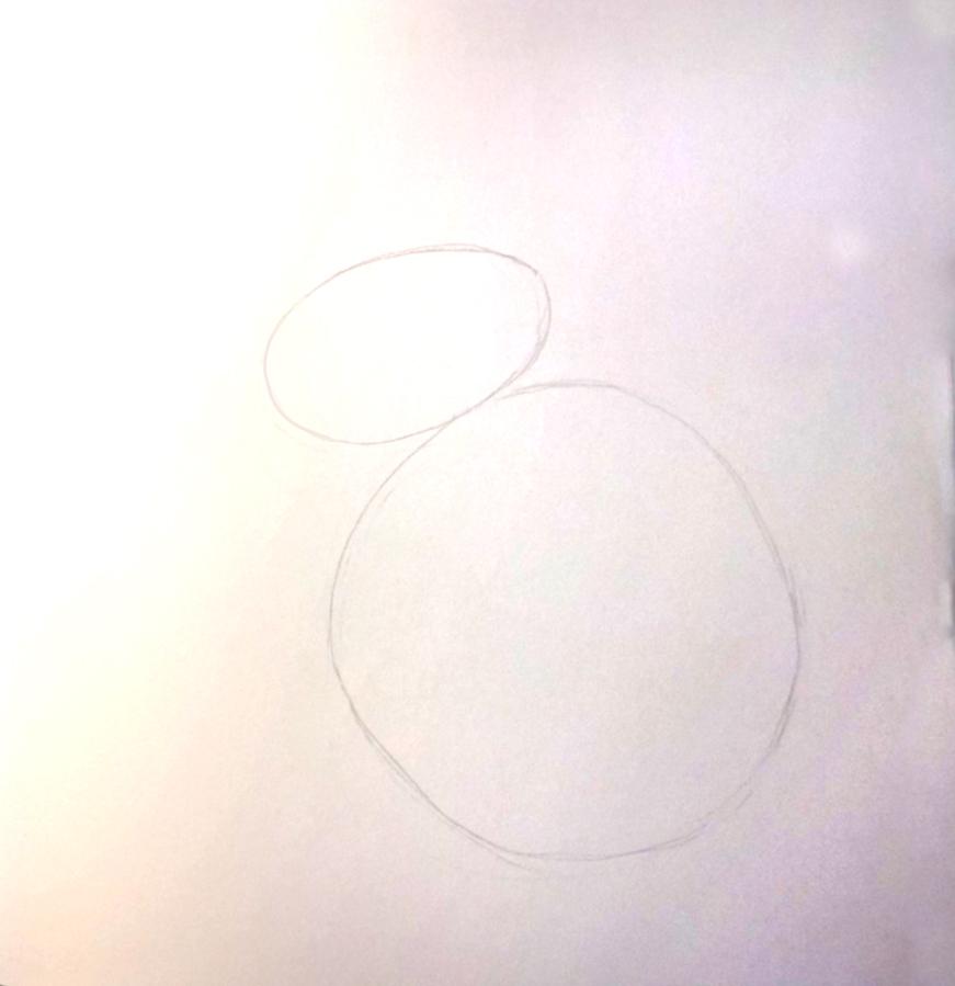 So zeichnest du ein Kaninchen, Zeichnung Schritt 2