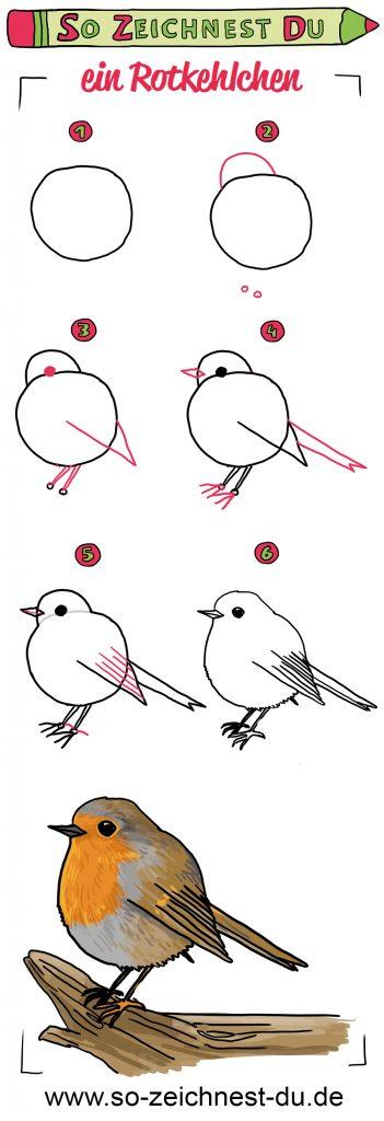 So zeichnest du ein Rotkehlchen Zeichenschule