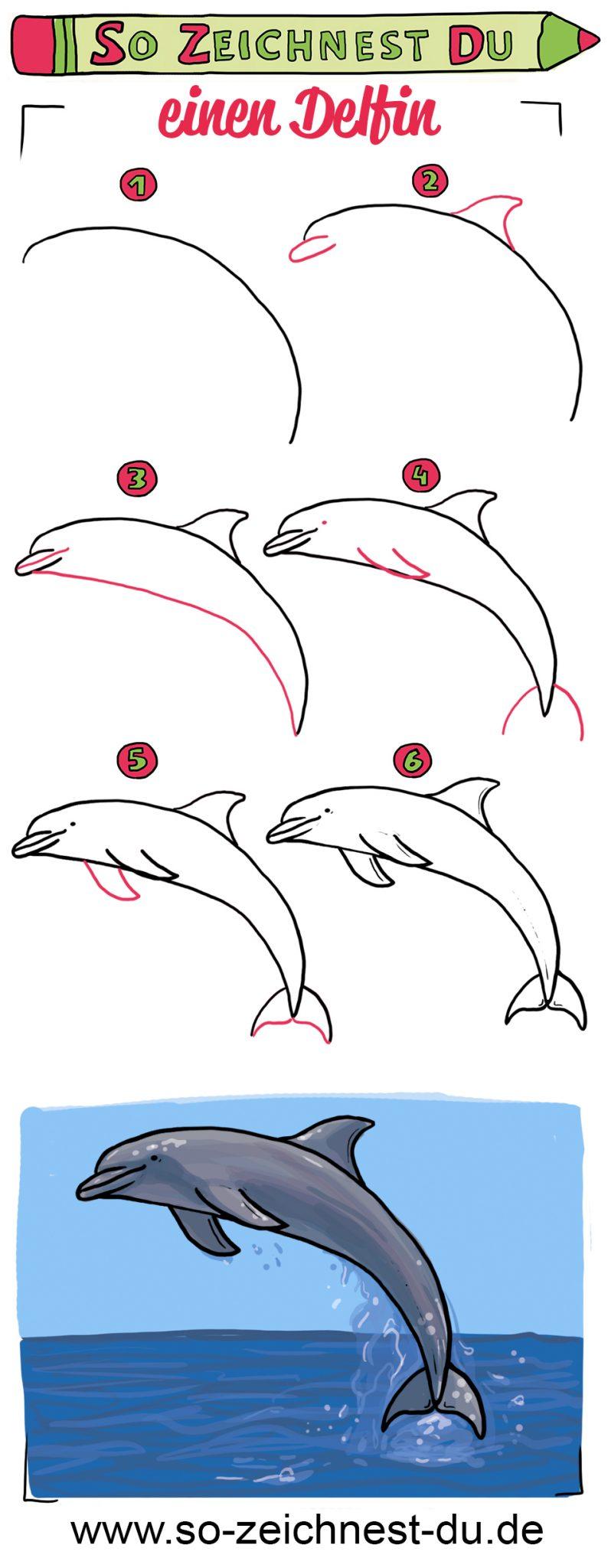 So zeichnest du einen Delfin Zeichenschule Meer
