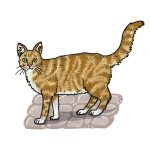 So zeichnest du eine Katze