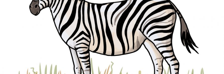 So zeichnest du ein Zebra
