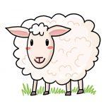 So zeichnest du ein Schaf (einfach)