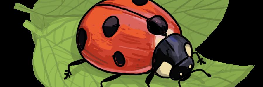 Dein eigener Glückskäfer – So zeichnest du einen Marienkäfer
