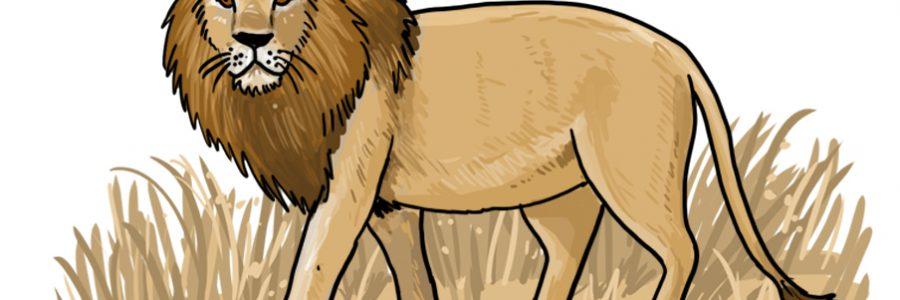 So zeichnest du einen Löwen