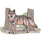 So zeichnest du einen Wolf