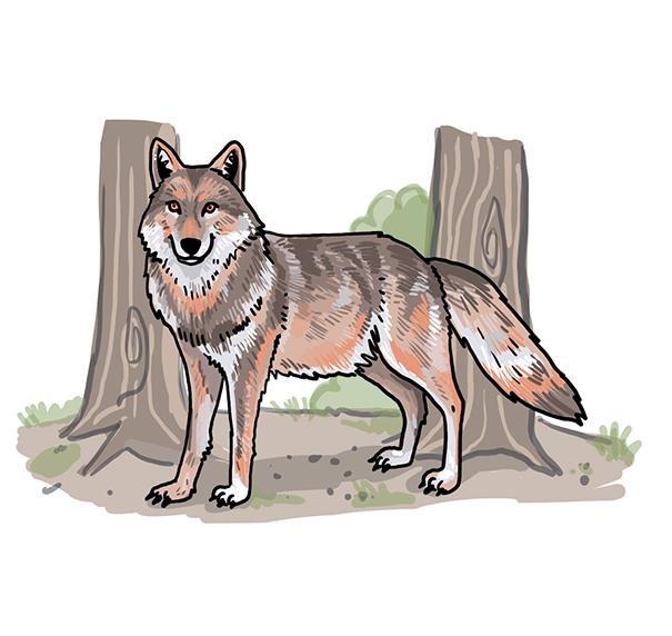 So Zeichnest Du Einen Wolf So Zeichnest Du