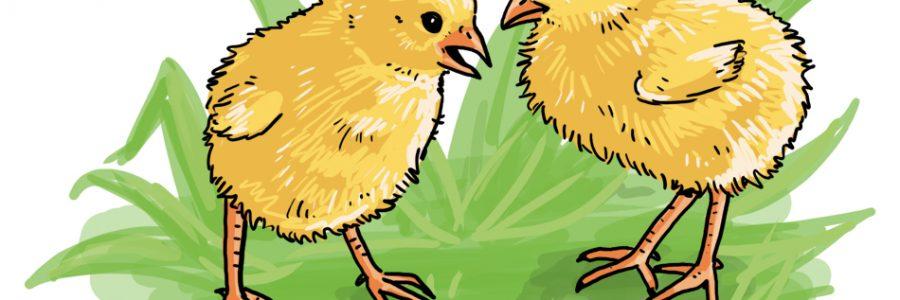 So zeichnest du Küken * Ostern *