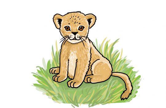 So zeichnest du ein Löwenbaby