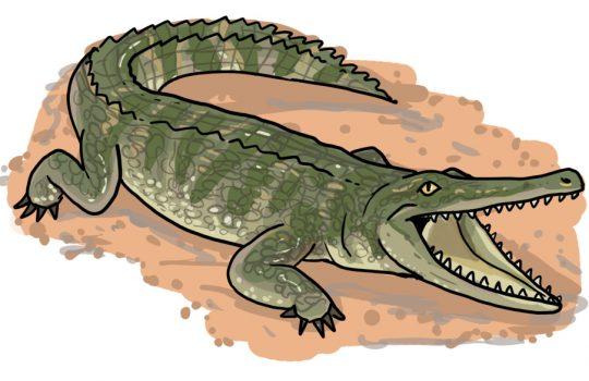 So zeichnest du ein Krokodil