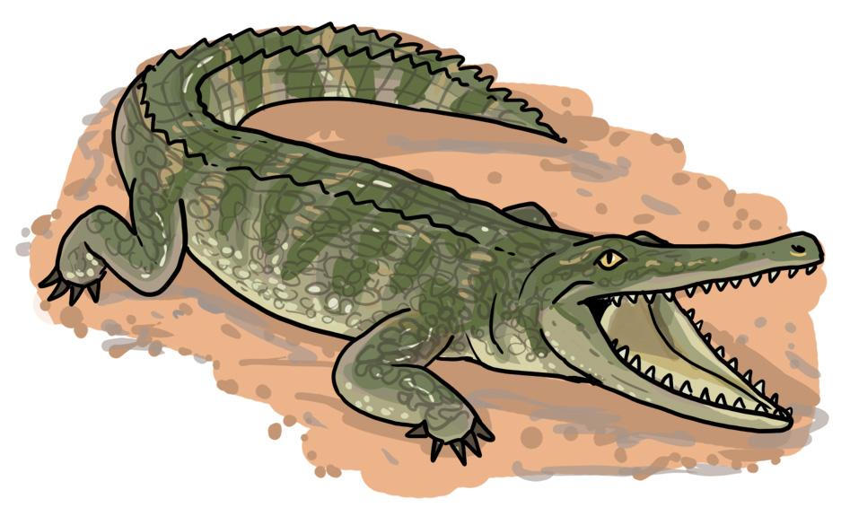 dinosaurier zeichnen ganz leicht