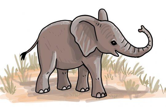 So zeichnest du ein Elefantenbaby