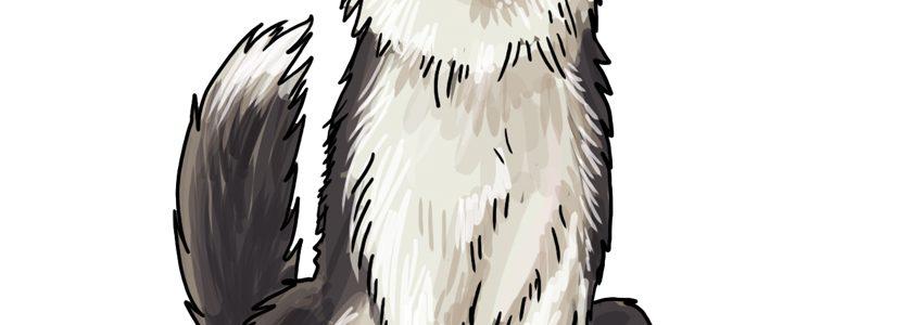 So zeichnest du einen Hund (Border Collie)