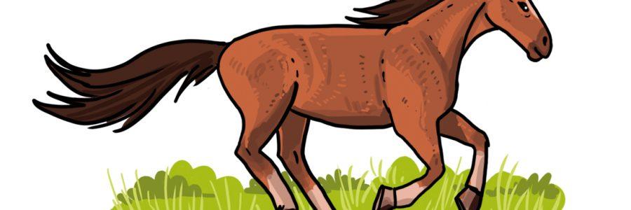 So zeichnest du ein Pferd