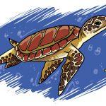 So zeichnest du eine Schildkröte