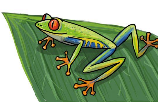 So kannst du einen Frosch zeichnen