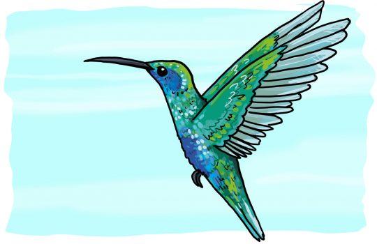 So zeichnest du einen Kolibri