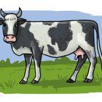 So zeichnest du eine Kuh