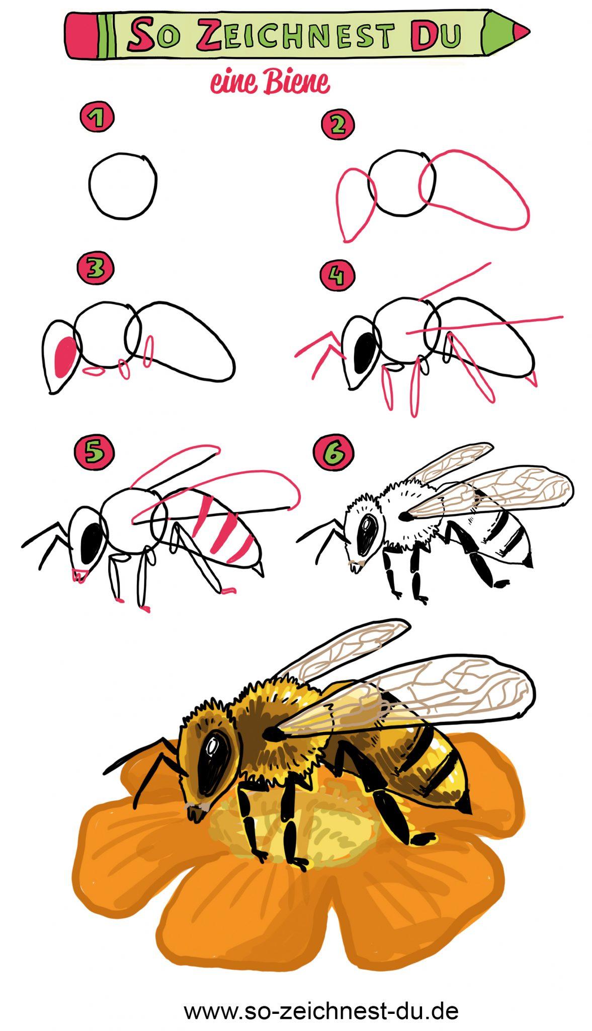 Biene zeichnen Anleitung