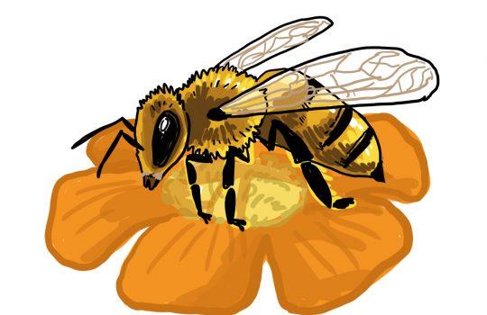 So zeichnest du eine Biene