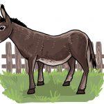 So zeichnest du einen Esel
