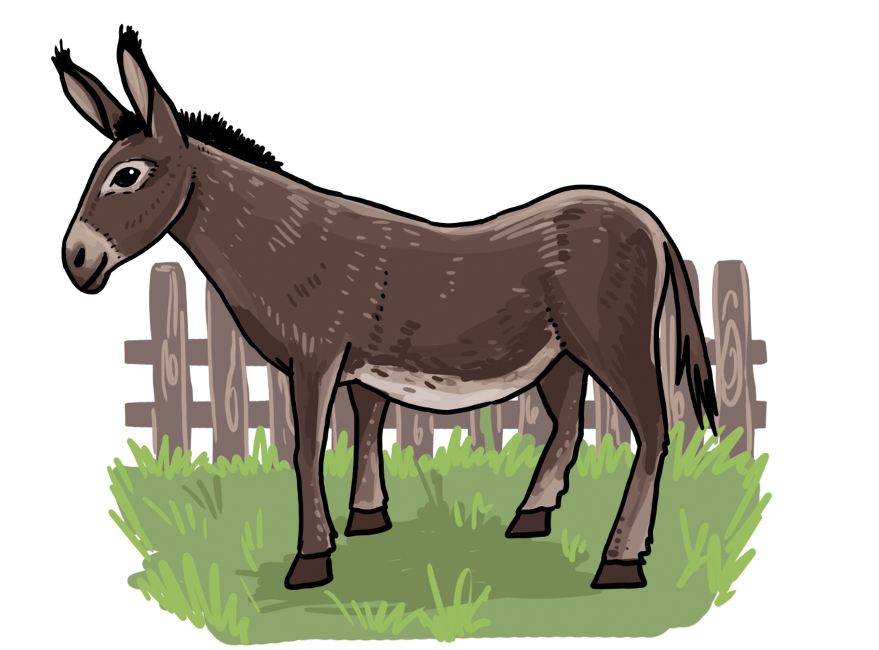 So zeichnest du einen Esel - Einfach zeichnen lernen