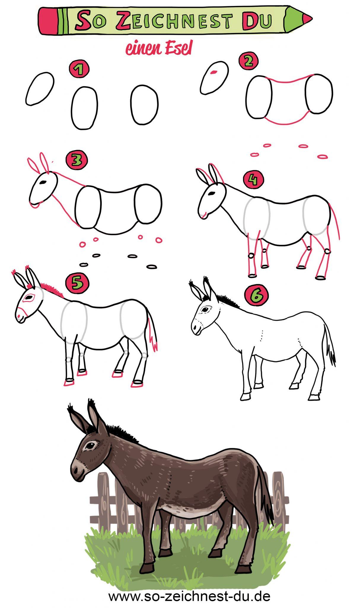 So zeichnest du einen Esel Zeichenschule Tiere Anleitung