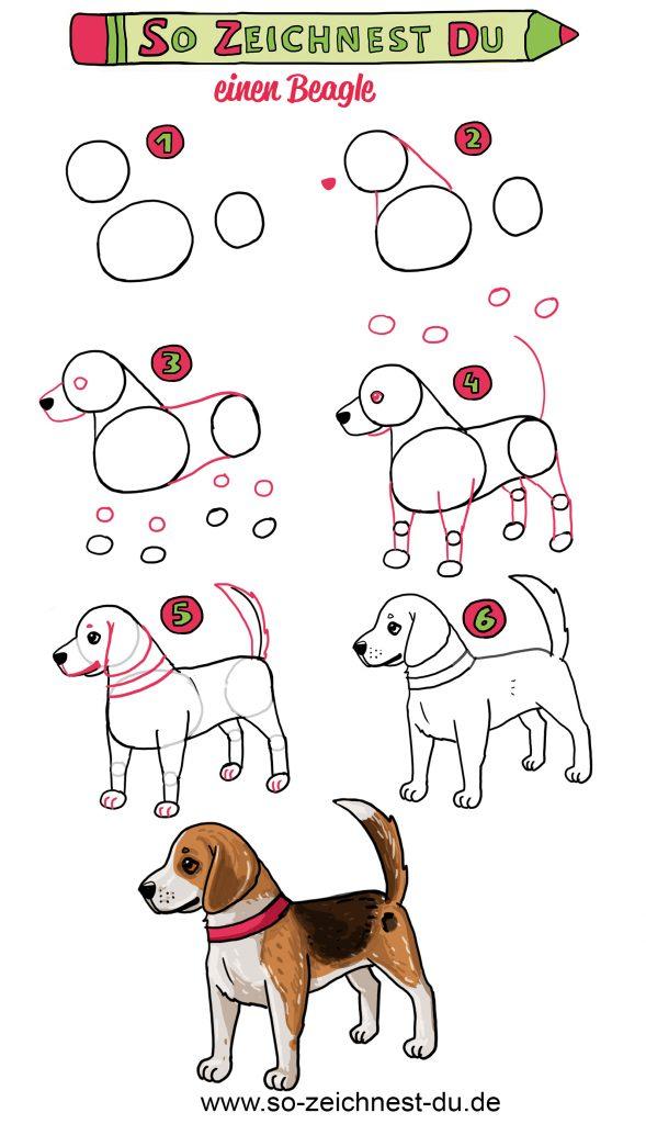 Hund Beagle Zeichenanleitung