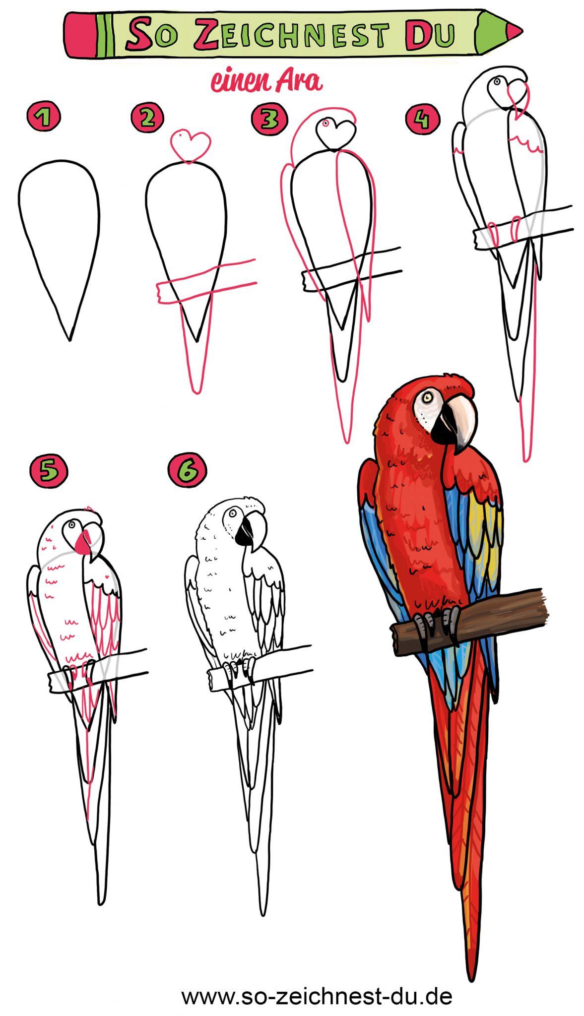 Papagei zeichnen lernen - die Zeichenanleitung