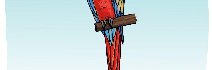 So zeichnest du einen Papagei (Ara)