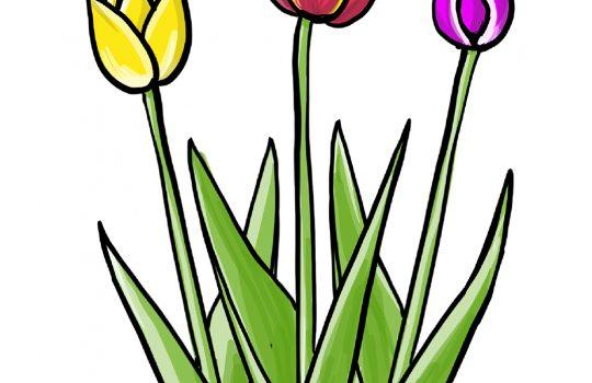 So zeichnest du Tulpen – einfache Anleitung zum Nachzeichnen