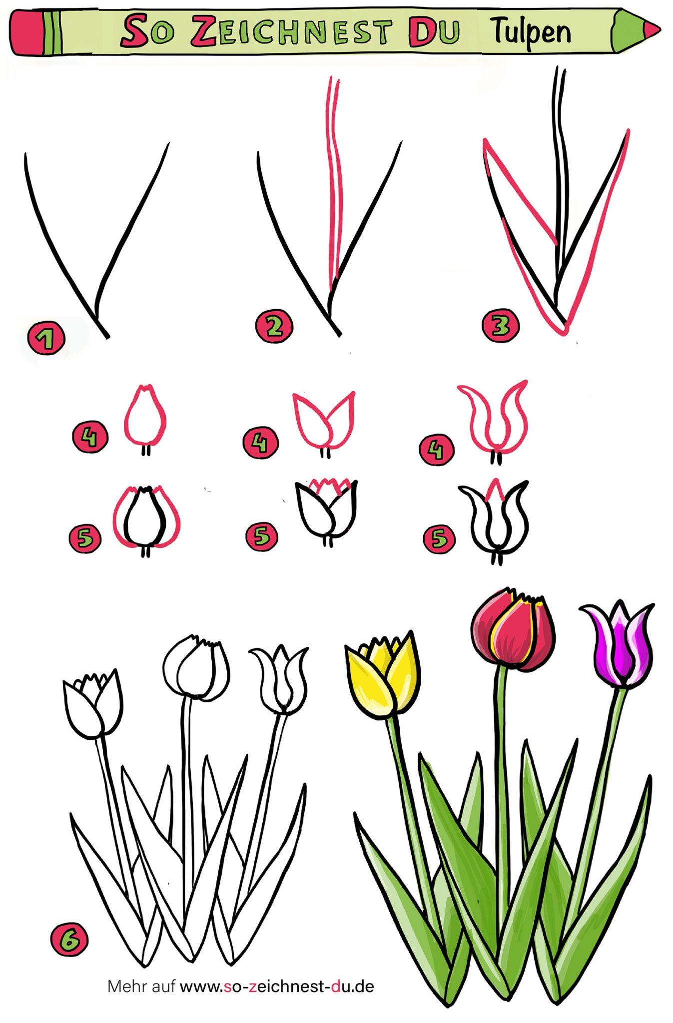 Tulpen zeichnen einfache Anleitung